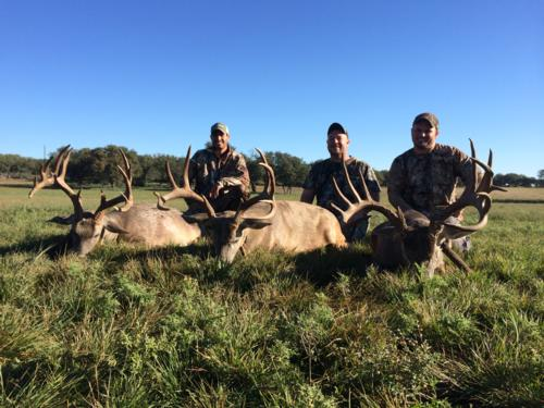 First Whitetail Hunt Report